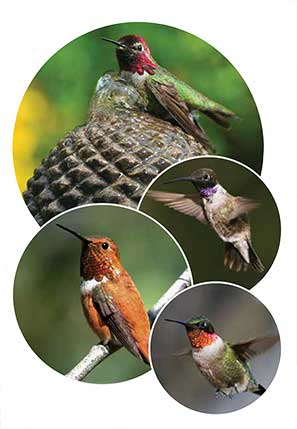 hummingbirds-1