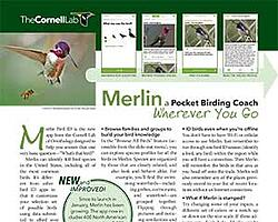 Cornell_Lab_Merlin-App-Tips_preview