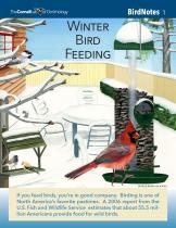 BirdNote01  Winter Bird Feeding  color image resized 162