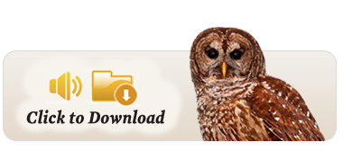 owl download