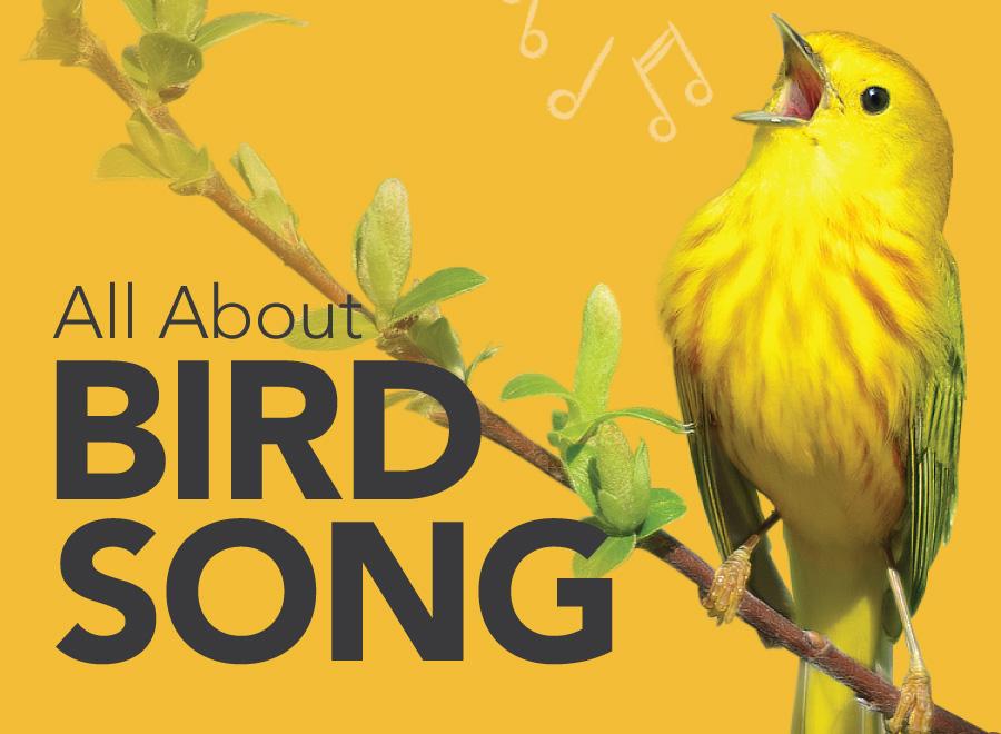 birdsong-blog-v2
