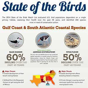 Gulf Coast & Southeast Atlantic Birds Infographic