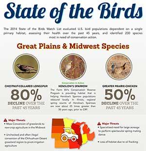 Great Plains & Midwest Bird Habitats Infographic