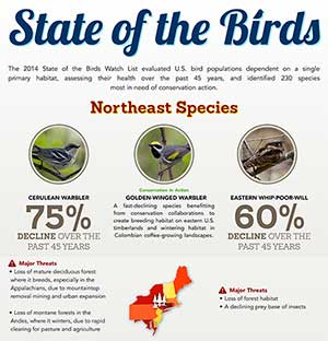 State of Northeastern Birds