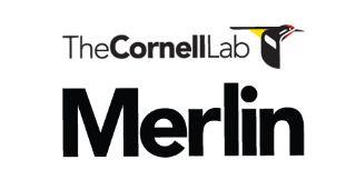 Merlin.CornellLab.lock.jpg