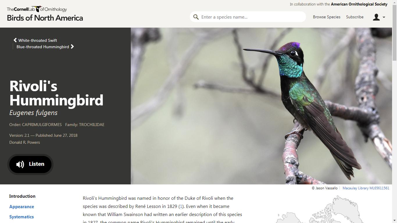 BNA Rivoli's Hummingbird Home Page