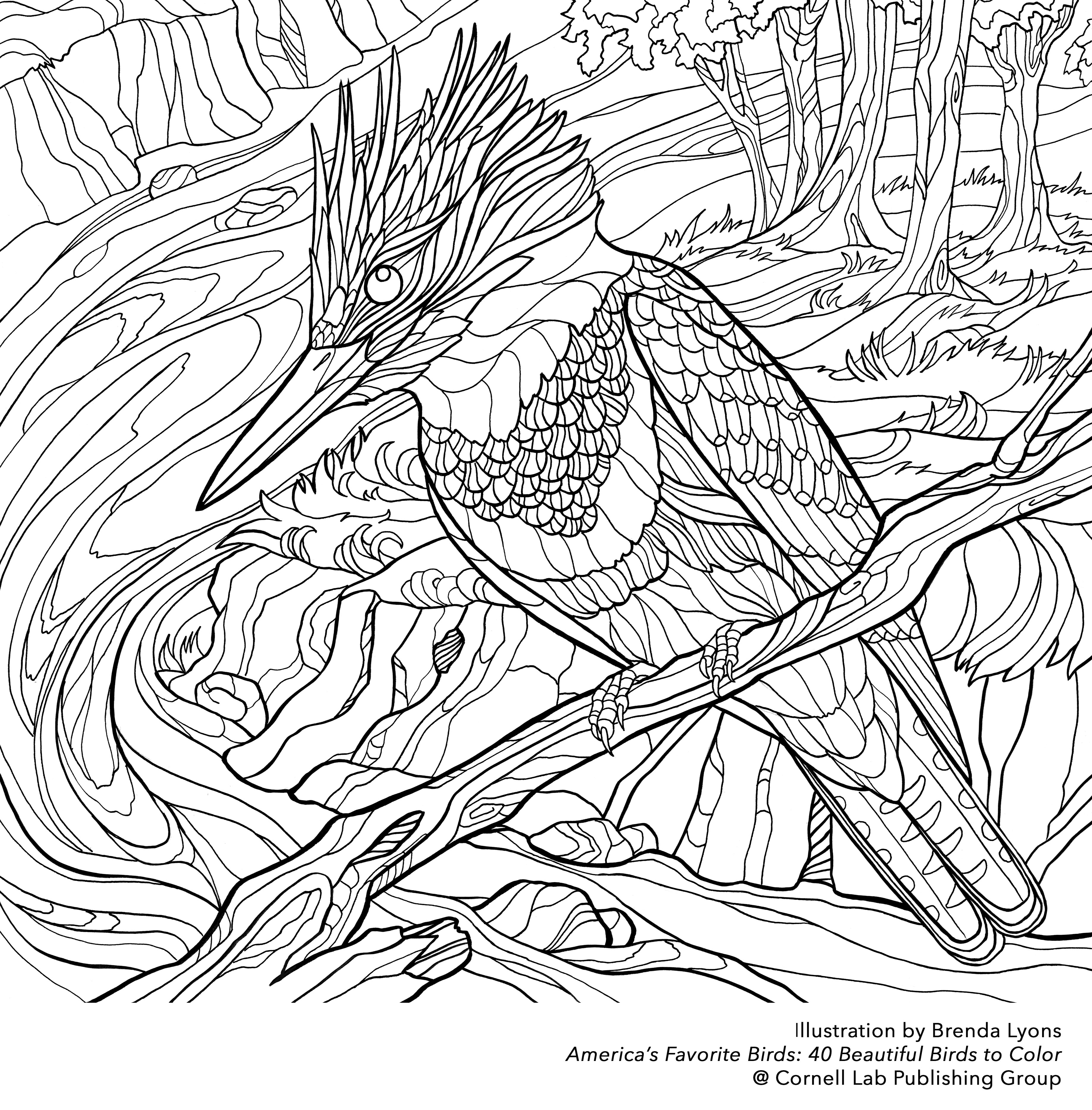 Line Drawing Kingfisher : Kingfisher bird coloring page click the