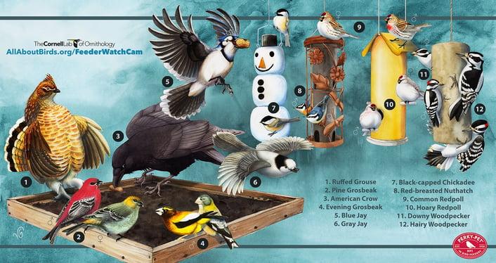 BirdCams_OntarioFeederWatchDownload_VGreene.jpg