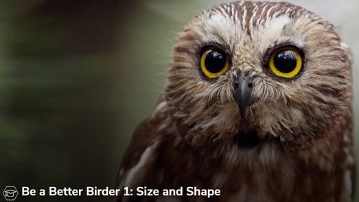 better-birder-og-image