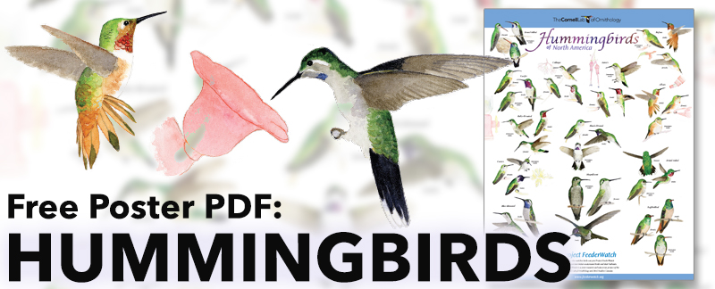 hummingbird-poster-email-banner